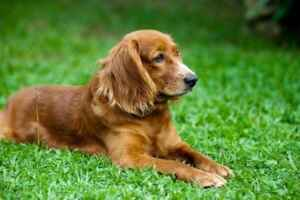 keep dogs from pooping on lawn