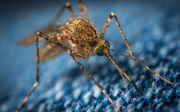 Keep Mosquitos Out Of Your Yard
