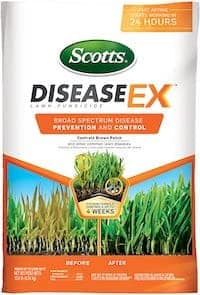 kill brown patch disease with lawn fungicide