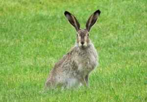 what plants keep rabbits out of your yard?