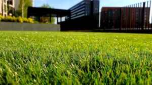 thin lawn prevention tips