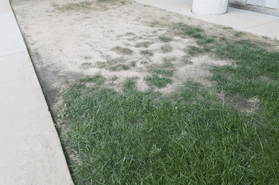 Lawn that won't grow