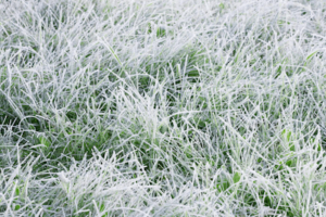 Tips for keeping your grass alive in winter
