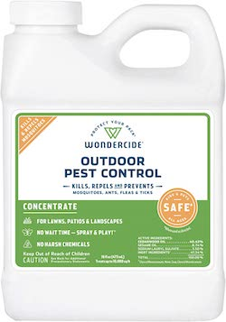 ant hill control naturally