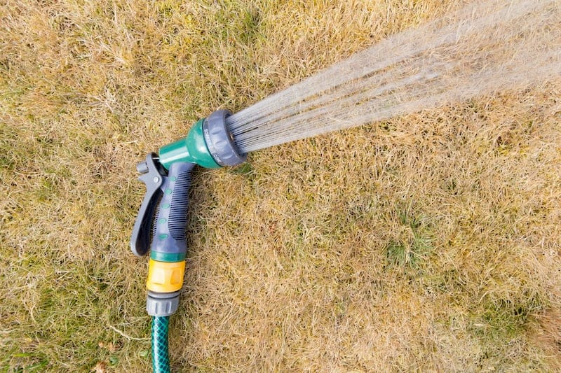Fixing Grass After Drought