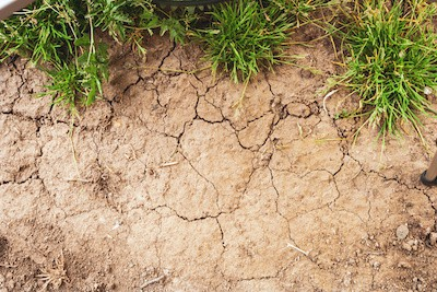 What Causes Cracks in Lawn