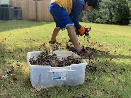 get rid of leaves to get rid of gnats
