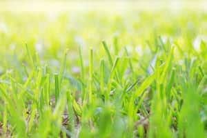 Green grass with sunlight in the morning.