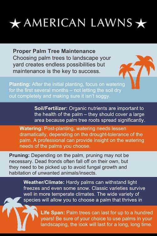 palm tree landscaping infographic