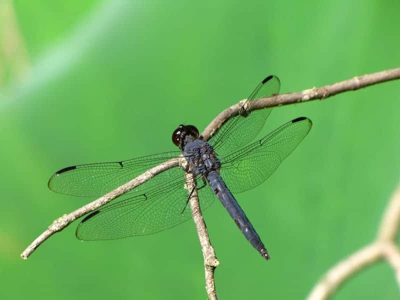 Getting Rid of Dragonflies