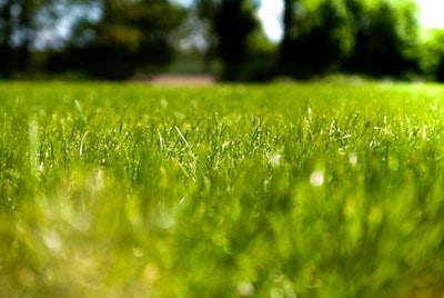 Tips for Green Grass