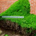 Best Cordless Hedge Trimmer for Topiary 2021