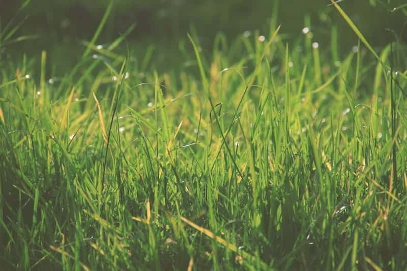 How Lime Helps Lawn Growth